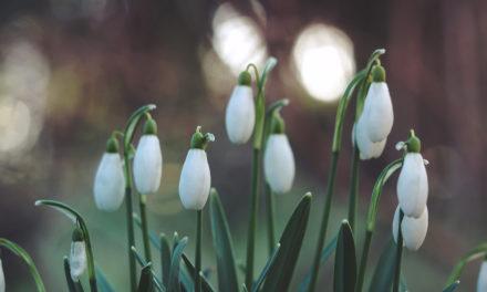 Kdy bude první jarní den?