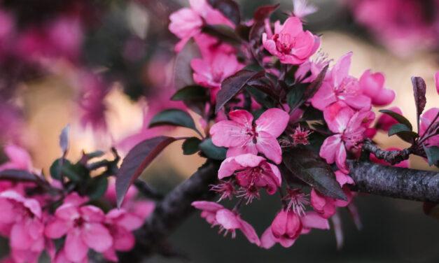 Budou během květnových svátků otevřené obchody?